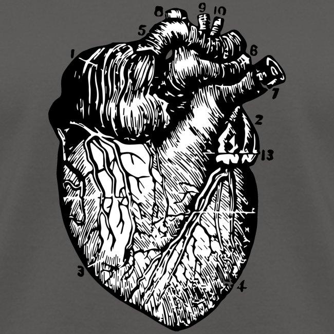 Big Heart - Vintage Medical Illustration