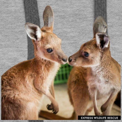 2 kangaroos kissing - Women's Premium Hoodie