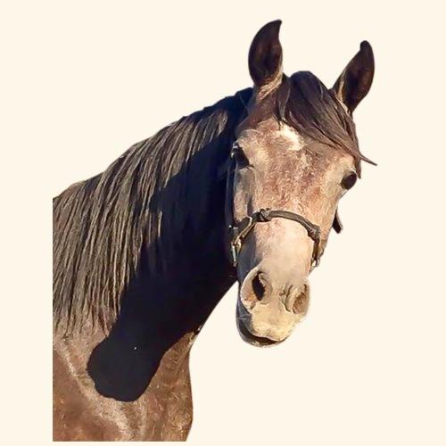 Horse Head - Men's Premium T-Shirt