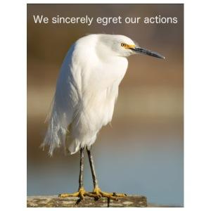 Sincere Egret photo by Frank Schulenburg - Men's Premium T-Shirt
