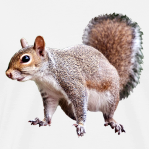 squirrel clipart 2 - Men's Premium T-Shirt