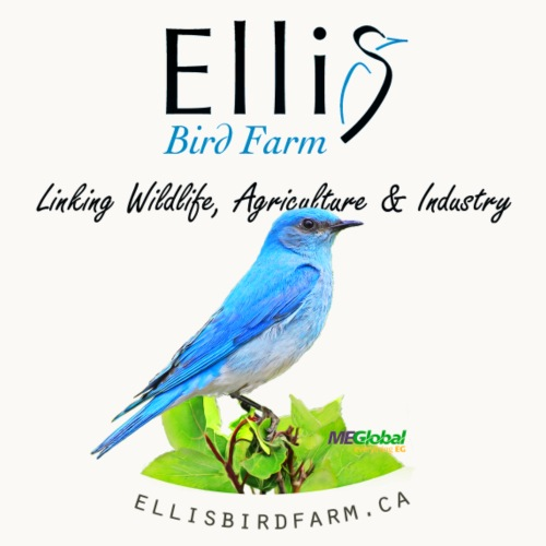 Ellis Bird Farm - Carolyn Sandstrom - Men's Premium T-Shirt