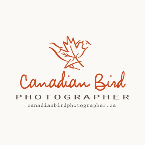 Canadian Bird Photographer - BK Text - Men's Premium T-Shirt