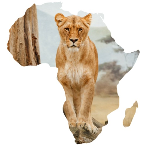 Lion Of Africa - Men's Premium T-Shirt