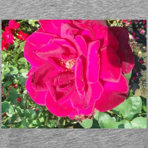Rose in bloom - Men's Premium T-Shirt