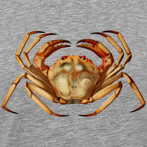 Atlantic sea animal red crab seafood food wildlife - Men's Premium T-Shirt