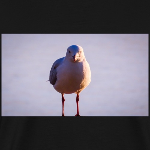 Silver Gull - Men's Premium T-Shirt