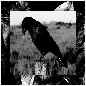 Crow Feathers - Men's Premium T-Shirt