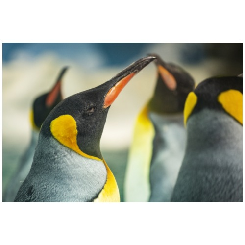 King Penguin - Men's Premium T-Shirt