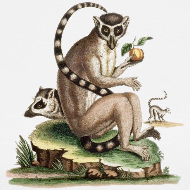 Lemur Artwork