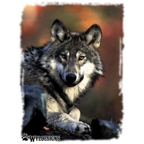 Wolf s Gaze - Men's Premium T-Shirt