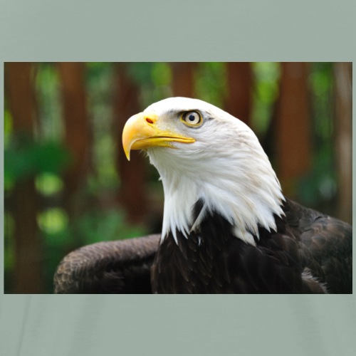 American Eagle Tee - Men's Premium T-Shirt