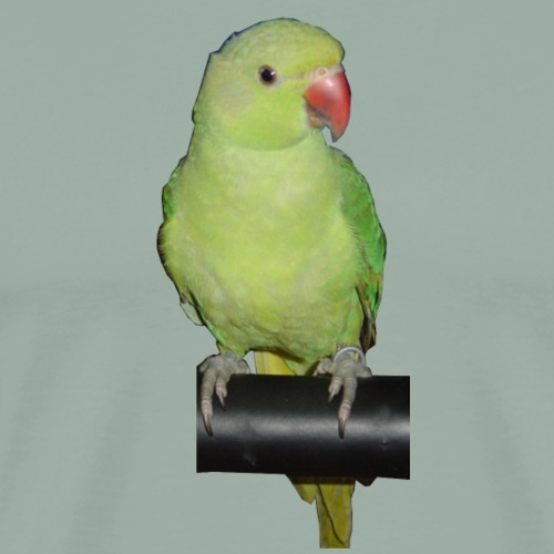 gigigreenbird - Men's Premium T-Shirt
