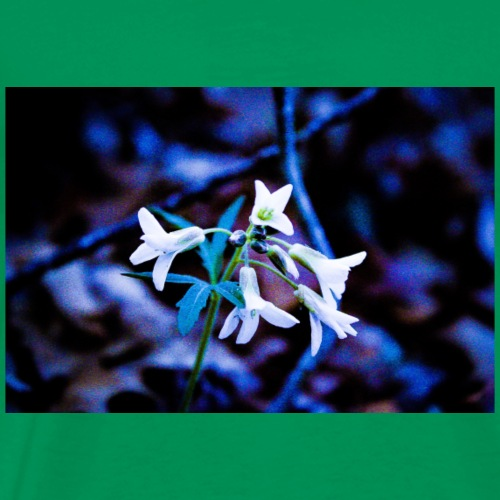 White Flowers In Nature - Men's Premium T-Shirt
