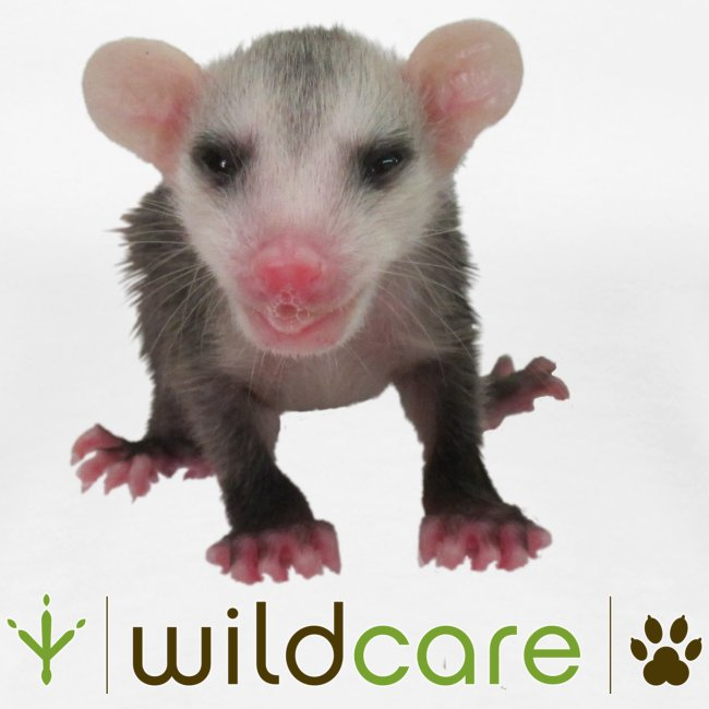 Baby Opossum in Care at WildCare