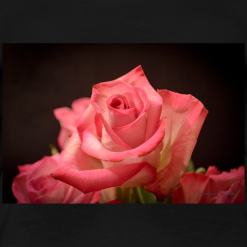Rose at Candlelight - Women's Premium T-Shirt