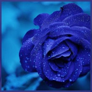 Blue rose - Women's Premium T-Shirt