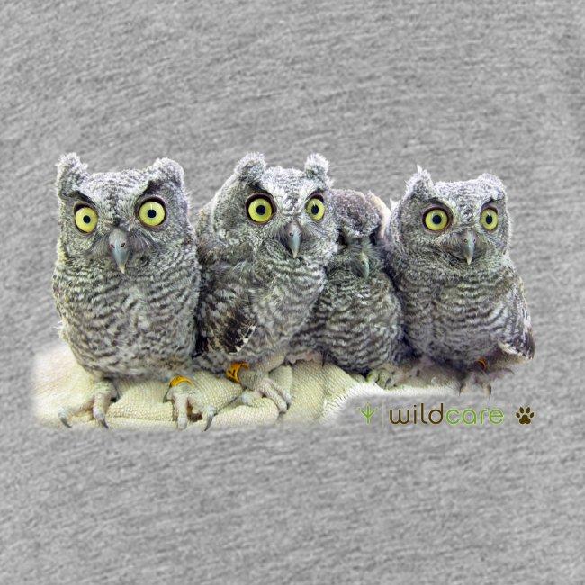 Five Western Screech Owls at WildCare