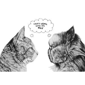 Cat Confusion by Julia E.