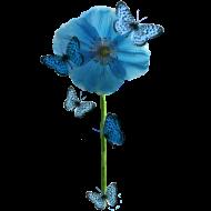 Design ~ Blue Butterflies & Poppy