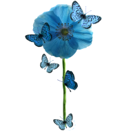 Design ~ Blue Butterflies & Poppy
