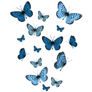 Design ~ Blue Butterflies