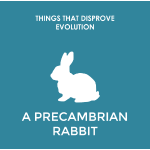 A precambrian rabbit