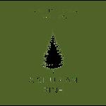 A silurian pine
