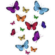 Design ~ Rainbow Butterflies