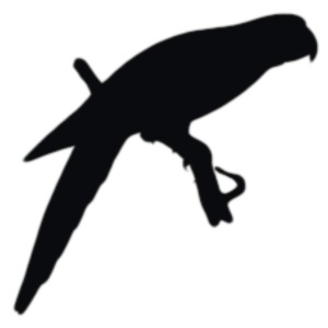 parrot shadow png