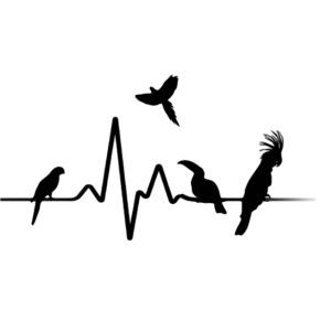 parrotgroup