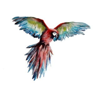 FlyingMacaw