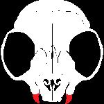 Dead men can't catcall (skull)