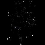 splatter plant