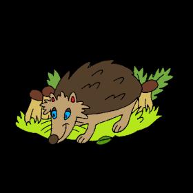 Igel Hedgehog hérisson