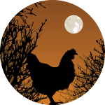 chicken moon