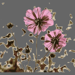 Burnt Flower