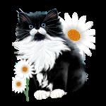 Little Tux  Kitten-Daisy