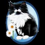 Tuxedo Kitten Oval-daisy