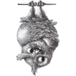 Vampire - Owl