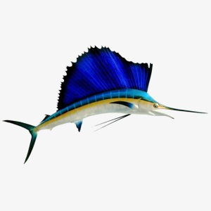 SAILFISH-01
