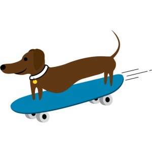 Dachshund Skateboarding