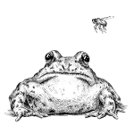 Frog with Fly by Imoya Design