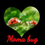 moma bug