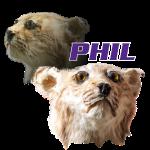 Phil the bobcat
