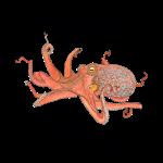 11_17 octopus tshirt LH