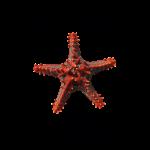11_17 starfish tshirt LH