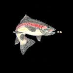 12_17 fish Tshirt LH
