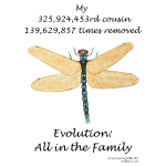 11-17 dragonfly Tshirt LH