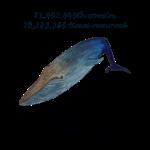 11_17 whale Tshirt LH